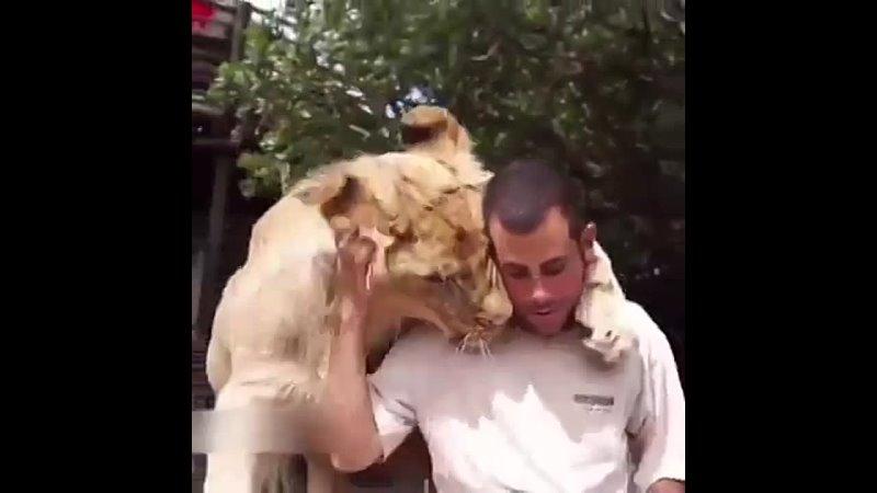 За пределами человеческой любви