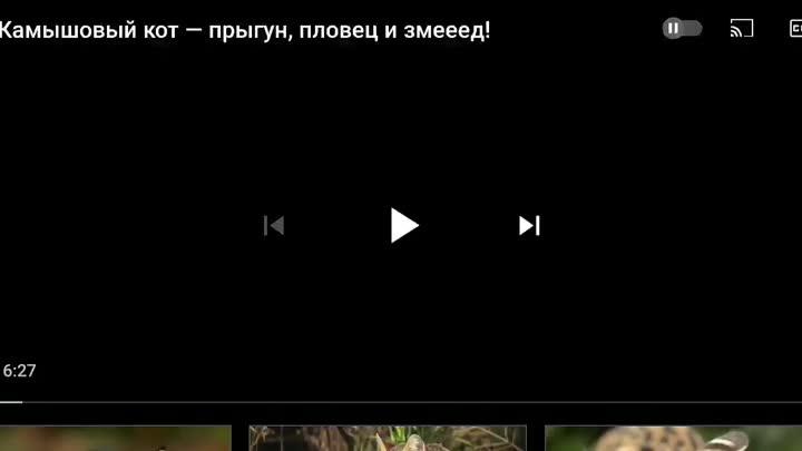 Screen_Recording_20210525-211221_YouTube.mp4