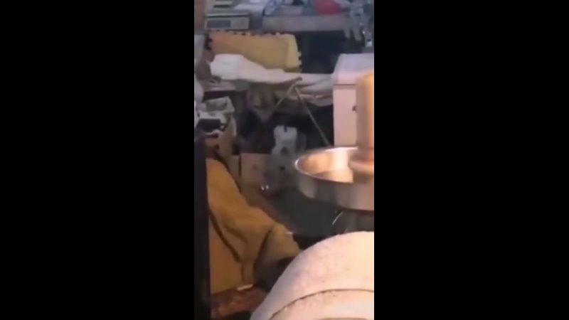 Пёсик Жгет SINNERs BONES