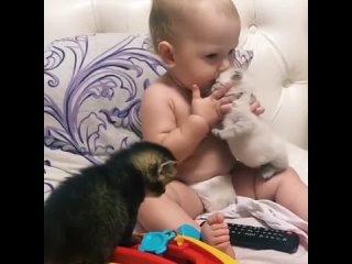 Любитель животных