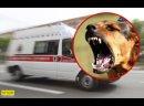 В Ровно собака напала на маленькую девочку и вцепилась в лицо малышку прооперировали.