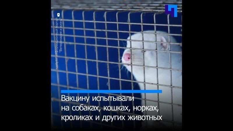 В России зарегистрировали первую в мире вакцину против коронавируса для животных
