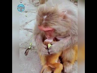 А ведь никто их не учит нежностям, а они умеют поцеловать и приголубить, значит чувства у них развиты, как и у нас от природы.