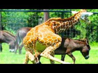 Животные с самым необычным поведением.