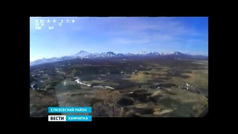 Вести Камчатка Авиаучёты бурых медведей
