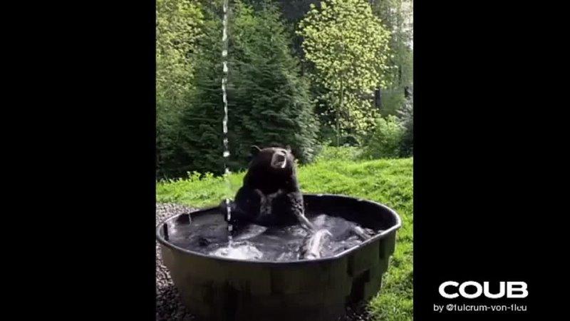 Bear on vacationМедведь купается