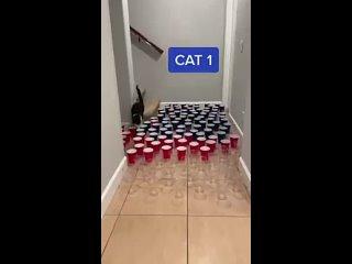 три вида котов