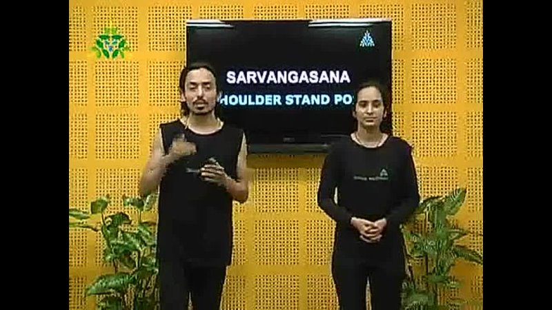 @phoenix ikarian Shoulder Stand Pose Sarvangasana