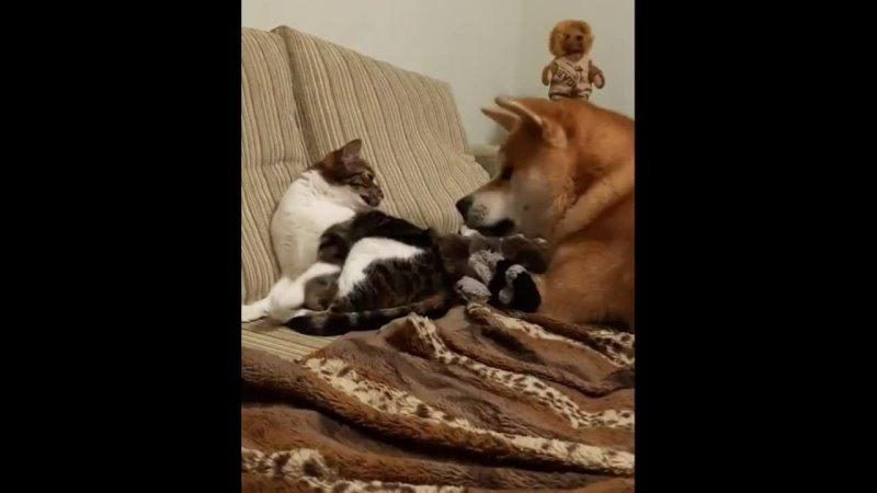 Любовь кошки бесценна 😍