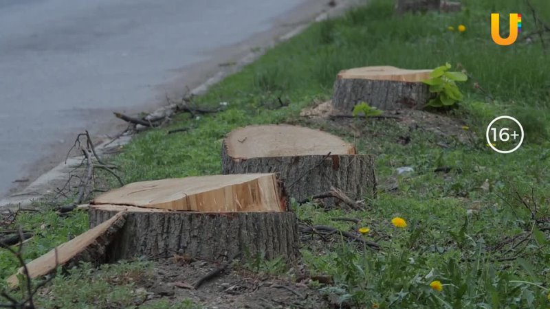 """В центре Уфы опять вырубили деревья Как и почему город постепенно лишается зеленого пояса"""""""