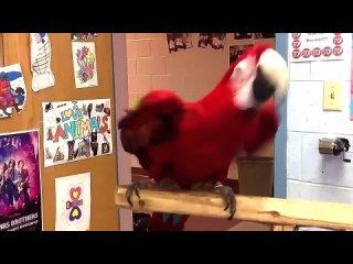 Тот случай, когда у попугая вкус выше твоего!