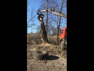 Ломовоз при спиле деревьев незаменим!