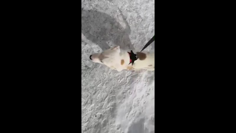 Прогулка со Снежей