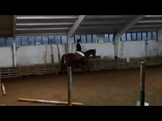 бронзовый призёр на первых соревнованиях по конному спорту