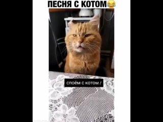 А давайте споем!)