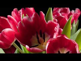 Какая красивая музыка о нежности и любви Цветы красиво распускаются под музыку