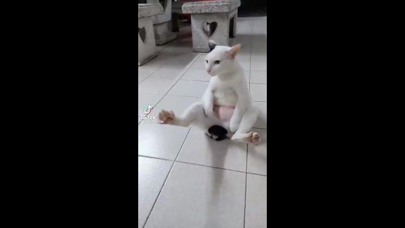 кога - кошачья йога