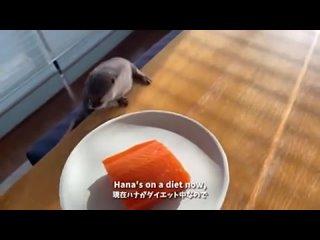 Вот бы меня лососем так кормили!