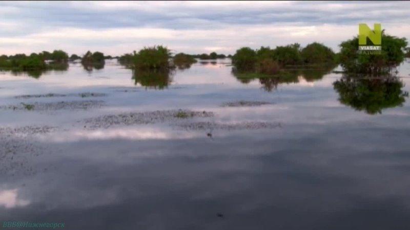 Тайны мировых озёр 3 Озеро Тонлесап Бьющееся сердце Камбоджи Познавательный природа путешествие 2015