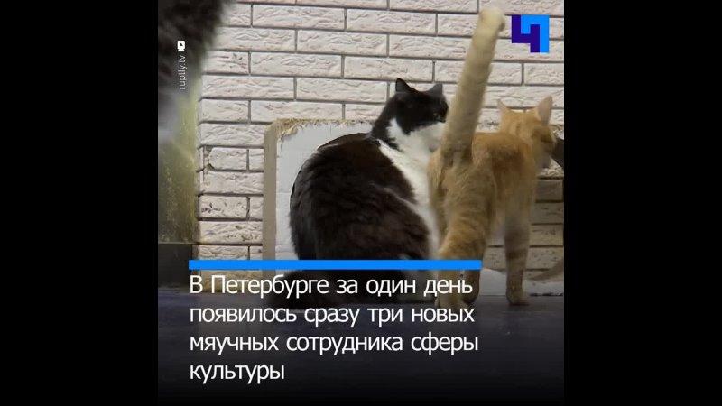 Трое обитателей петербургского котокафе поступили на службу в культурных учреждениях
