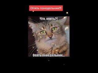ДА УЖ ПОНЕДЕЛЬНИК.mp4