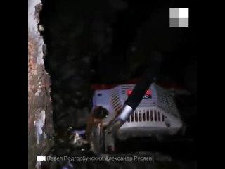 В «Парковом» под покровом ночи спилили больше десятка деревьев