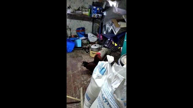 Видео от Ольги Курман