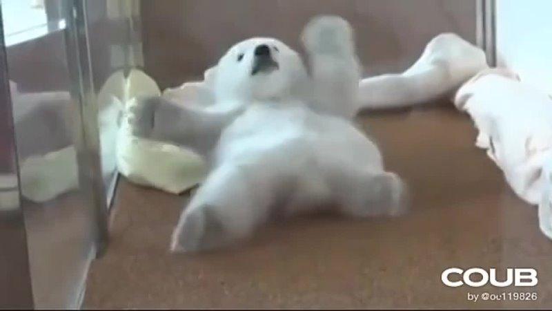 Мишутка хочет встать на лапы