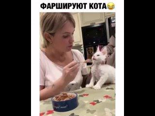 Судя по мордахе котейки, он не очень рад такой кормёжке😂