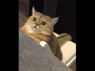 Как бы вы назвали видео ), если тебе понравилось видео поставь пожалуйста  ⠀  @bq_cats   ⠀.mp4