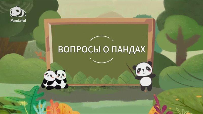 Кто является естественными врагами для диких больших панд