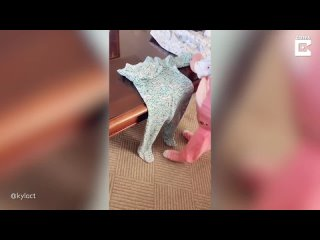 [Caters Clips] Little Girl Shows Off Folding Skills