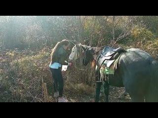 конные прогулки СОЧИ