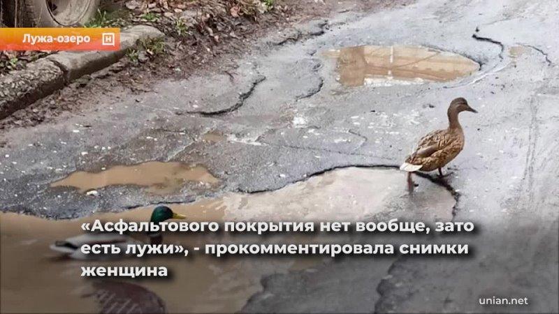 Во Львове лужа на разбитой дороге превратилась в настоящее озеро