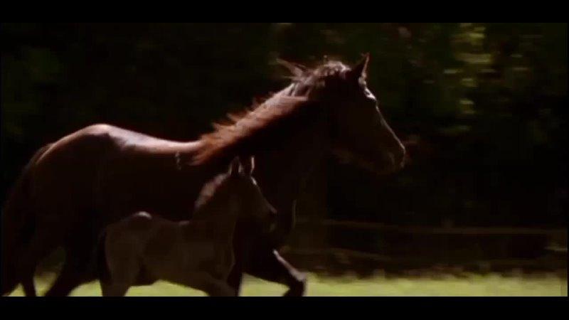 Фильм 'Чёрный красавчик ' песня 'Я к тебе возвращаться буду всегда'