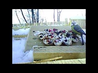 Покормите птиц - миссия выполнима