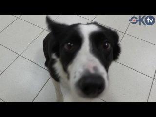 ⚡ В Колпинском районе бесплатно вакцинируют собак от бешенства