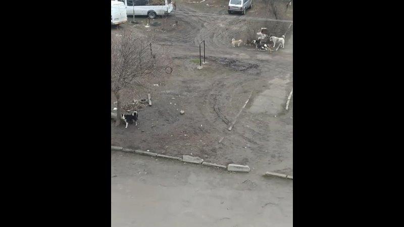 Добрый день Это район кооператор ул Революционная 4 коробка собак с каждым днём всё больше