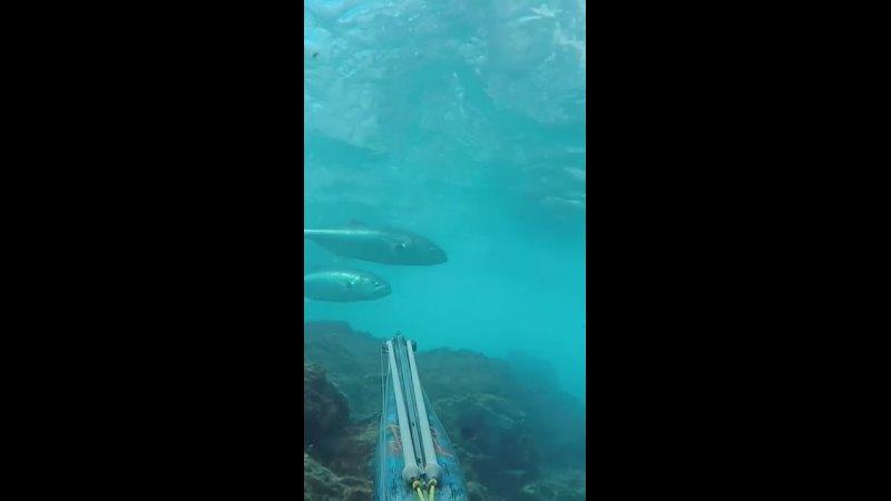 Увлекательный мир подводной охоты 🙃