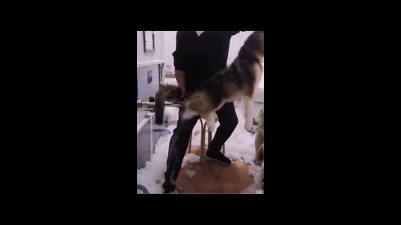 Собакен задумался над своим поведением и своей жизнью