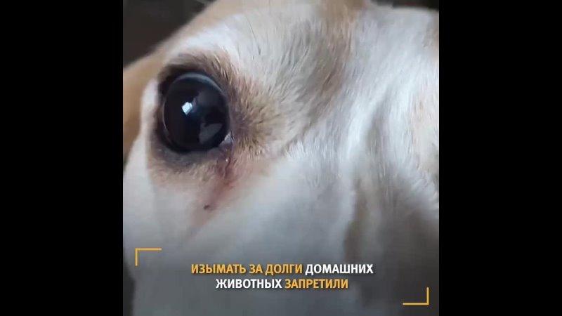 Домашние животные остаются в семье Брать в заложники питомцев с целью взыскать долги запретили Подробности в нашем видео