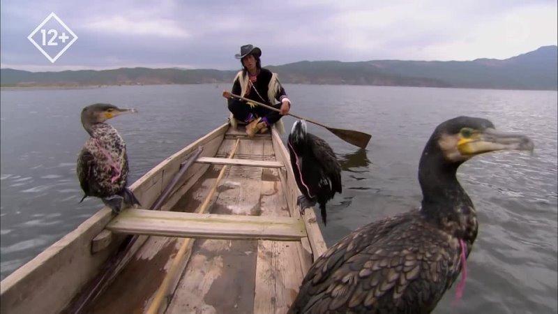 Рыбная ловля с бакланами Китай озеро Лаши