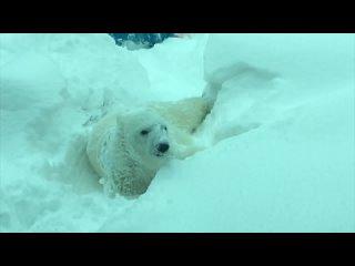 Вот кто любит снег по-настоящему