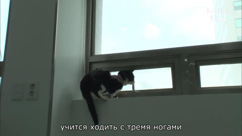 Бродячий кот у которого сломана передняя нога хочет чтобы люди не бросали в него камни