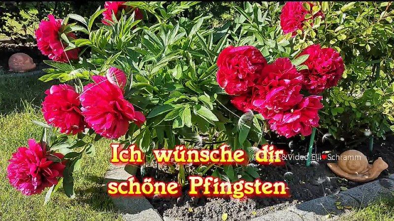 Видео от Constantin Wesler