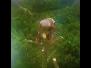 Спил дерева на высоте без страховки cgbk lthtdf yf dscjnt ,tp cnhf[jdrb cgbk lthtdf yf dscjnt ,tp cnhf[jdrb cgbk lthtdf yf dscjn
