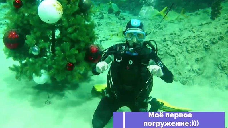 Адажио с акулами mp4