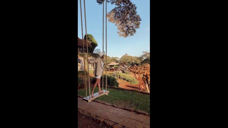 Поцелуй с жирафом Giraffe Manor Kenya
