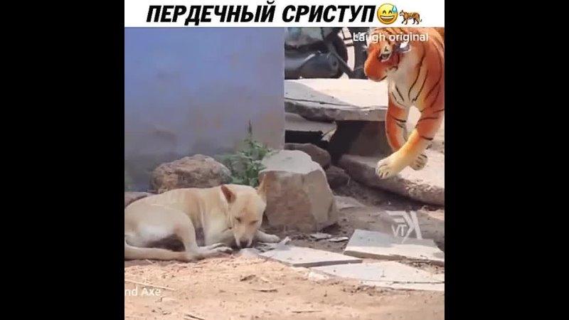 По собакам видно что их и так жизнь потрепала ещё дополнительный стресс им🤦🏻♀️