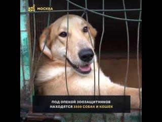 В самом крупном приюте для бездомных животных состоялся субботник